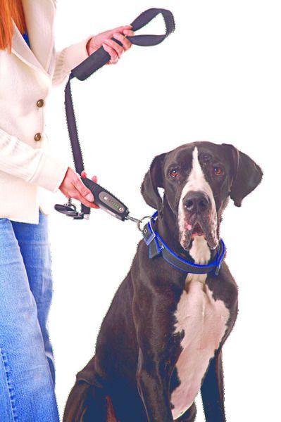 Sonderposten: Doge Walk Hundetrainer