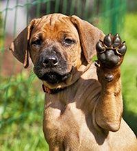 Pfotenpflege-Creme für Hunde und Katzen