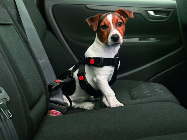 Auto Sicherheitsgeschirr